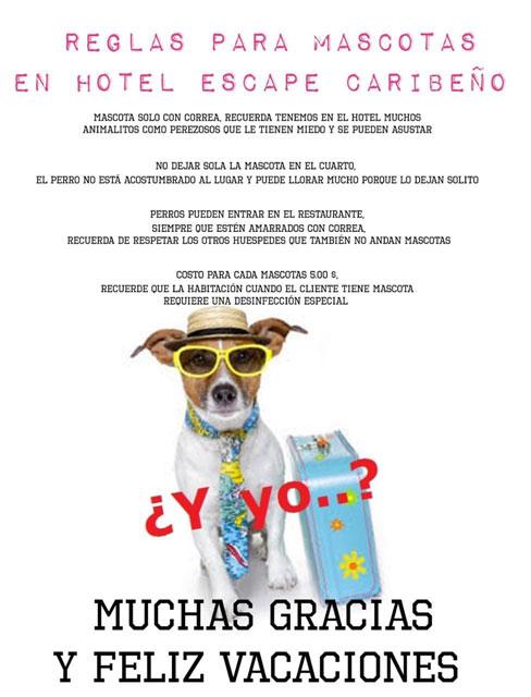 Hoteles en Puerto Viejo que aceptan mascotas